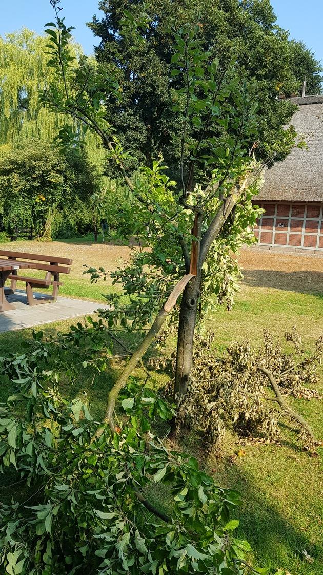 Rotenburg  POL-ROW: ++ Vandalismus am Heimathaus – Unbekannte zerstören Apfelbaum ++