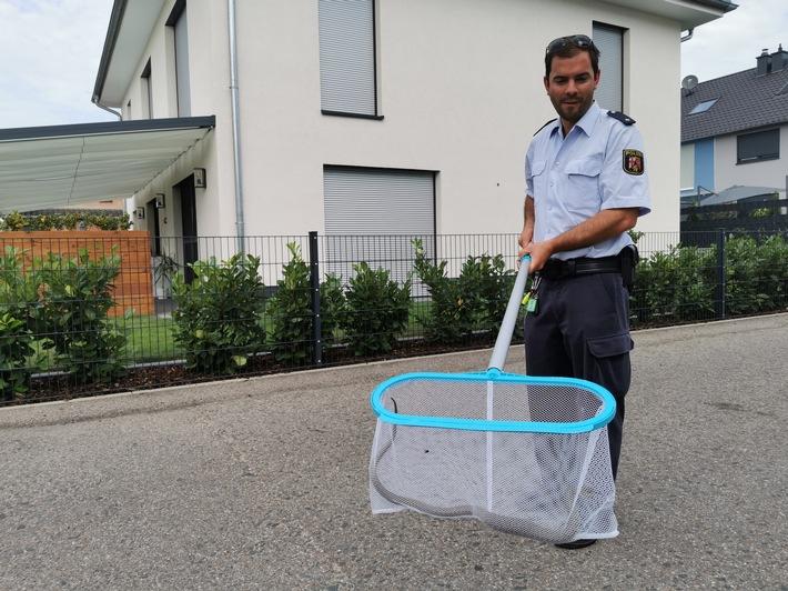 POL-PDLD: Wörth am Rhein – Ringelnatter versetzt Anwohnern einen Schrecken